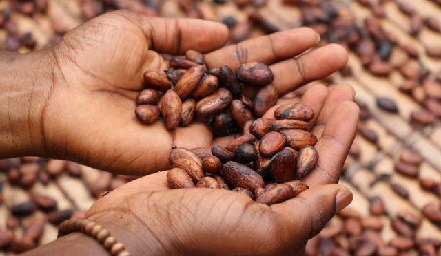 Child labour in the cocoa industry: the bitter side of chocolate